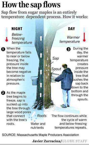 Image result for temp of sap for syrup